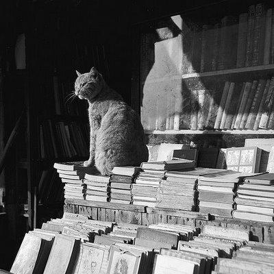 Gat_llibre de vell